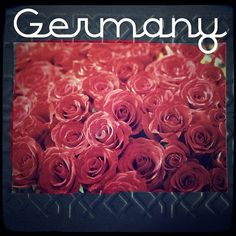2013-09-13 #Postcard from #Germany (DE-2313664) via #postcrossing #roses #flowers #red #Padgram