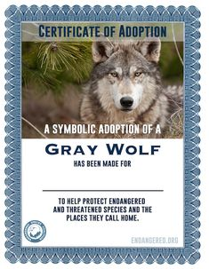 Help protect the Endangered Species Act by supporting grassroots organizing. Endangered Species, Habitats, Certificate, Wolf, Adoption, Names, The Incredibles, Symbols, Gift