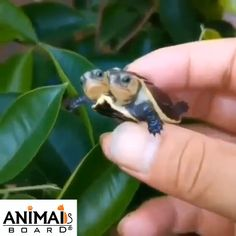 Double-headed turtle - New Ideas Cute Funny Animals, Cute Baby Animals, Cute Dogs, Funny Pets, Cute Turtles, Baby Turtles, Turtle Baby, Nature Animals, Animals And Pets