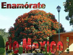 El Árbol del Tule is a tree located in the church grounds in the town center of Santa María del Tule in the Mexican state of Oaxaca