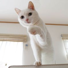 #cat #cats #кот #кошка