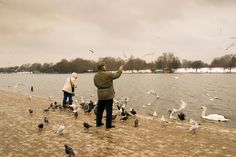 Feeding the ducks on the Serpentine Lake in the middle of Hyde Park, central London Art Thou, Hyde Park, Simple Things, Best Cities, How Beautiful, Ducks, Middle, London, City