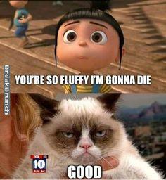 Grumpy cat, grumpy cat meme, grumpy cat humor, grumpy cat quotes, grumpy cat funny …For the funniest memes and jokes visit www. Grumpy Cat Quotes, Funny Grumpy Cat Memes, Funny Animal Jokes, Cute Funny Animals, Funny Animal Pictures, Animal Memes, Cute Cats, Funny Cats, Funny Jokes