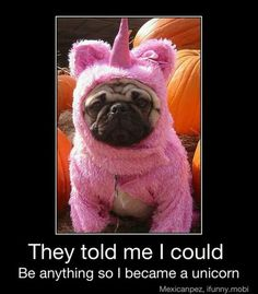 Unicorn Pug - Thx Michelle! Laurie you need this for buster!!