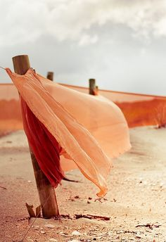 Cuba Gallery: Sand dune / beach / Landscape / New Zealand / Orange / Post / Wind (by Andrew :: I love this color palette Peach Colors, Orange Color, Summer Colors, Orange Twist, Orange Sky, Orange Fabric, Coral Color, Blowin' In The Wind, Shades Of Peach