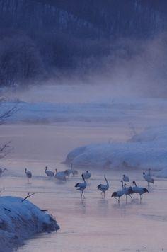 Tsurui village, Hokkaido, Japan もっと見る