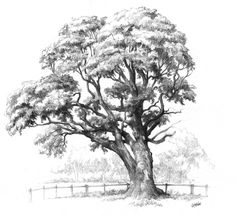 Maple tree drawing for Domin drawing course by gkorniluk on DeviantArt Tree Pencil Sketch, Tree Drawings Pencil, Landscape Pencil Drawings, Dark Drawings, Tree Sketches, Landscape Sketch, Realistic Drawings, Nature Sketch, Nature Drawing
