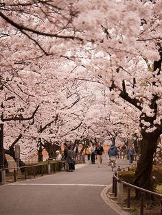 Tokyo, Japan  Try the food, Walk through parkways with Sakura blossoms. Visit a bathhouse.
