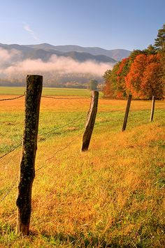 Drive through Cades Cove~Townsend side of the Great Smoky Mountains.but be prepared for crowds and bumper-to-bumper traffic! Beautiful World, Beautiful Places, Country Fences, Smoky Mountain National Park, Cades Cove, Great Smoky Mountains, Champs, The Great Outdoors, Lombok
