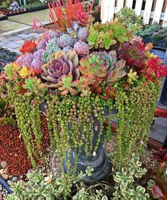 Gorgeous succulent arrangement planted up in a broken bird bath! Such a great idea to upcycle! Upcycle your broken bird bath and use it as a planter for your next succulent arrangement idea! Add gorgeous textures and color to your garden and recycle inste Succulent Landscaping, Succulent Gardening, Garden Plants, Garden Landscaping, House Plants, Succulent Planters, Succulent Rock Garden, Indoor Gardening, Hanging Planters