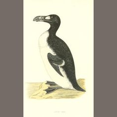 MORRIS (FRANCIS ORPEN) Birds, Eggs, 3 vol. ;History of British Birds, 6 vol. (9)
