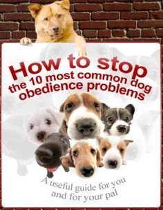 How to stop the 10 most common dog obedience problems #DogObedienceTipsandAdvice