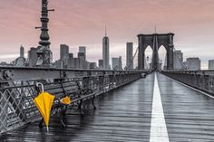 PH0500-ASSAF-FRANK-brooklyn-bridge