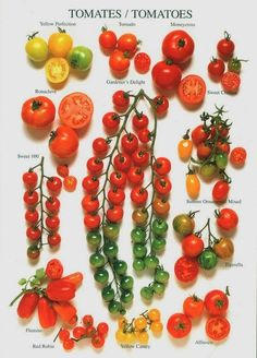 √    (image only)   Tomato Varieties