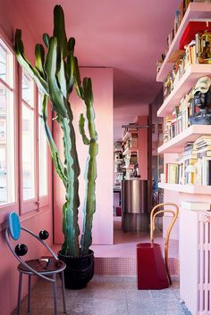 Pink walled home library with cactus.