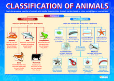 animal characteristics   IMAGE SOURCE: Daydream Education www.daydreameducation.co.uk ...