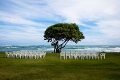 This is the tree under which I will be marrying the most handsome man I know.