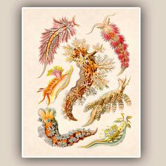 gravures poissons - Google Search