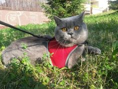 9,90€ Arnés Trixie XCat XL con parches y correa para gatos