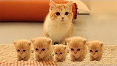 Watch So Many Cute Kittens Videos Compilation, Funny Kittens Video. Checkout these collection of cute kittens and their nasty things video. You may never seen this type of cute kittens collection. Watch and enjoy So Many Cute Kittens Videos Compilation. Cute Kittens, Cute Little Kittens, Cute Baby Cats, Cute Kitten Gif, Cute Baby Animals, Funny Animals, Beautiful Kittens, Animals Dog, Funny Cat Compilation
