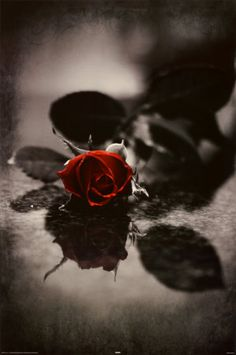 Red Gothic Rose Poster--ew1105