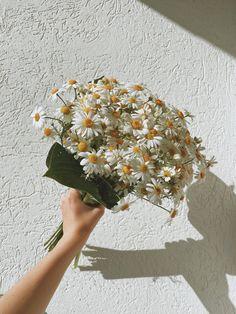 Aesthetic Room Decor, Sky Aesthetic, Flower Aesthetic, Daisy Wallpaper, Cute Girl Photo, Girl Photos, Cute Girls, Greenery, Beautiful Pictures