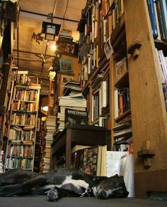 habanerocollective:  Home… is where the books are.  And the dog.