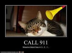 Call 911 in 3... 2... 1.....