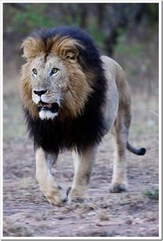 Beautiful….how can any one hunt and kill these stunning creatures?