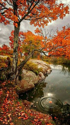 autumn scenes Chikanishing Autumn by Tracy Munson Beautiful World, Beautiful Places, Beautiful Pictures, Romantic Places, Landscape Photography, Nature Photography, Autumn Scenes, Autumn Aesthetic, Fall Pictures