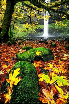 fall-waterfall-moss-forest