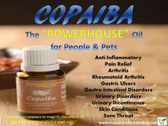 The POWERHOUSE Essential Oil for Pain and Inflammation!  http://www.essential-oils-4-healing.com/copaiba-essential-oil.html