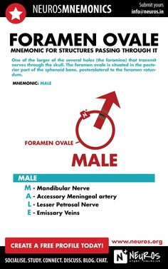Mnemonic for Structures passing through Foramen Ovale (Skull) Medical Mnemonics, Pharmacology Nursing, Medical Students, Nursing Students, Nursing School Notes, Ob Nursing, Nursing Schools, Medical School, Basic Anatomy And Physiology