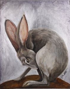 Jackrabbit Art Print