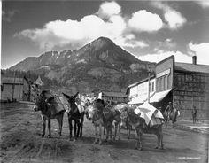Ouray, Colorado pack train, c.. 1913: History Colorado Collection