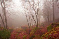 Fotostream di Corrado orio photography