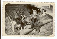 Eesti muuseumide veebivärav - Aiavilja 3, 1952.  Knitting with a Toggenburg.