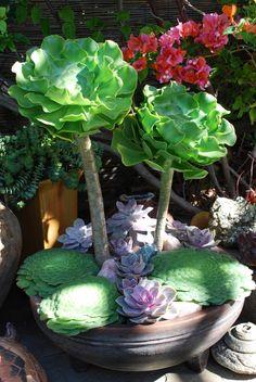 Succulent Arrangment Brandon Pruett, Secret Gardens, Doors Ideas, Minis Gardens, Superb Succulents, Awesome Planters, Succulents Rules, Aeonium Succulents, Succulents Arrangements