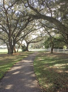 Robbins Preserve (Robbins Lodge Park), Davie, Florida. ~ Timeless Elegance by Desiree photography
