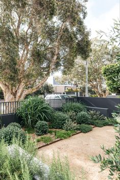 Outdoor Landscaping, Front Yard Landscaping, Outdoor Gardens, Landscaping Ideas, Australian Garden Design, Australian Native Garden, Bush Garden, Coastal Gardens, Mediterranean Garden
