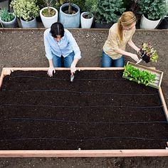 Construye una cama de cultivo paso a paso