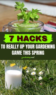 We've comprised a list of our favorite 7 gardening hacks that will not only save you time but transform your backyard into an oasis of greenery! #gardeninghacks #gardenhacks Gardening Hacks, Oasis, Greenery, Herbs, Backyard, Spring, Plants, Patio, Herb