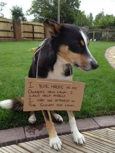 Dog Shaming features the most hilarious, most shameful, and never-before-seen doggie misdeeds. Join us by sharing in the shaming and laughing as Dog Shaming reminds us that unconditional love goes both ways. Cute Funny Dogs, Cute Funny Animals, Silly Dogs, Adorable Puppies, Funny Animal Pictures, Dog Pictures, Dog Shaming Pictures, Cat Shaming, Guilty Dog