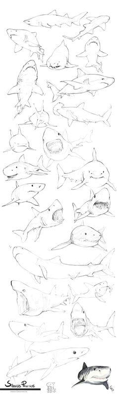 Sharks Practice by Charneco.deviantart.com on @deviantART