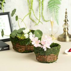 Buy All-Natural Preserved Moss Decoration Supplies and Craft Supplies from Tablecloths Factory. Stock Up on Moss Planters, Moss Grass, Moss Balls, Moss Fillers and more! Green Wedding Decorations, Christmas Decorations, Planter Boxes, Planters, Moss Grass, Mosses Basket, Moss Decor, Mothers Day Decor, Moss Plant