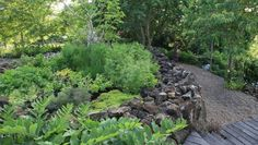 Image result for herb garden in mexico