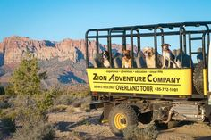 Experience the great Utah outdoors with Fido with Zion Adventure Company! #dogfriendly #adventures #utah