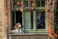 Brugge-7637 | Flickr - Photo Sharing!