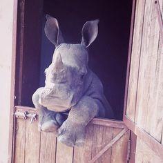 Rhino                                                                                                                                                     More