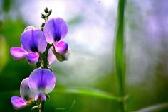 Beautiful Flower by badrule35, via Flickr